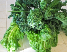 Kale, swiss chard and green onion