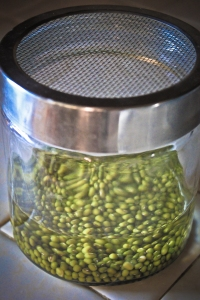 Soaking beans before sprouting