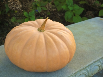 This is a Long Island Cheese pumpkin.  It has an unusual shape and color - even the name is intriguing!