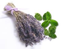 lavender_mint