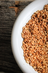 Sprouted Wheat and Spelt Berries