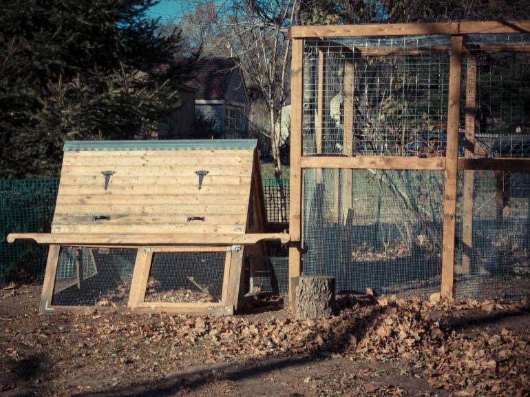 Chicken coop & chicken run