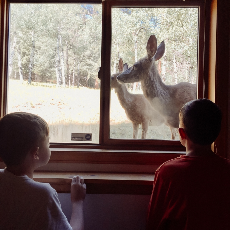 Deer looking in window as boys look out